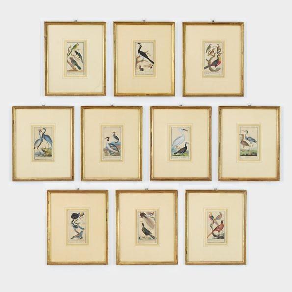 Kolekcja grafik z ptakami