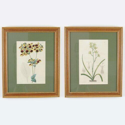 Grafiki botaniczne z XIX wieku